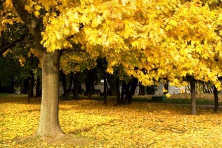 fall-woods.jpg