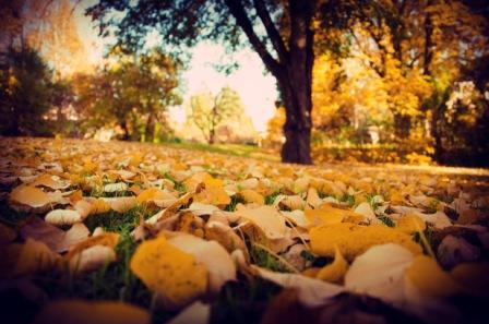 pic of fall leaves